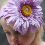 Wisteria Фиолетовая/Фиолетовая ромашка